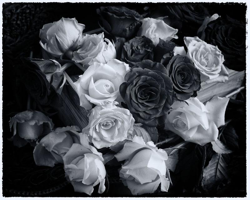 Roses - Black and White
