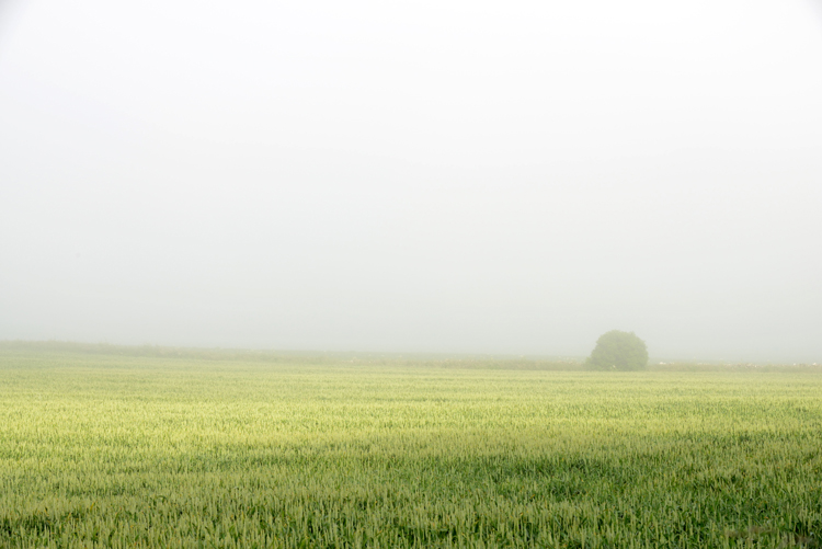 Morning Mist - Simplicity