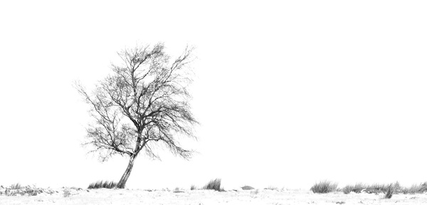 Solitree - Black and White