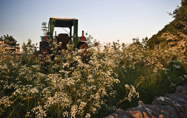 Sheldon tractor and flowers - Landscapes