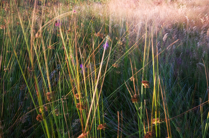 Grass 4 - Grass