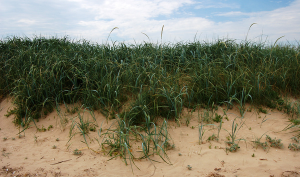 Grass and sand - The seaside