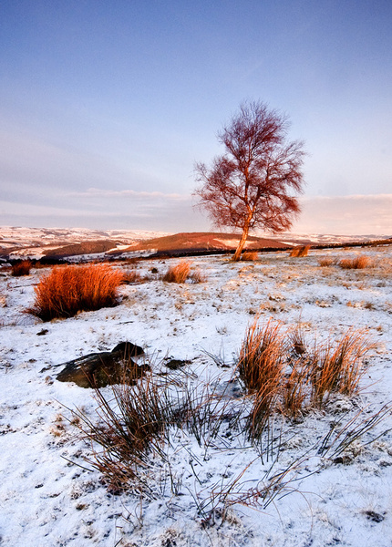 Silver Birch - Winter Landscapes