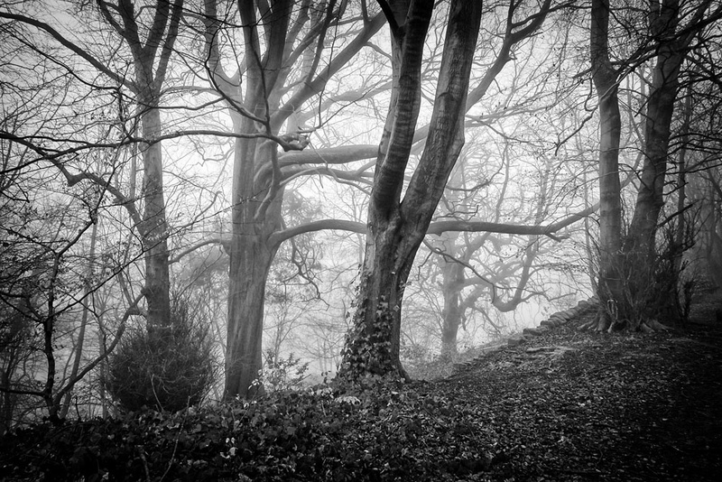 Lumsdale Twisted Trees - Black and White