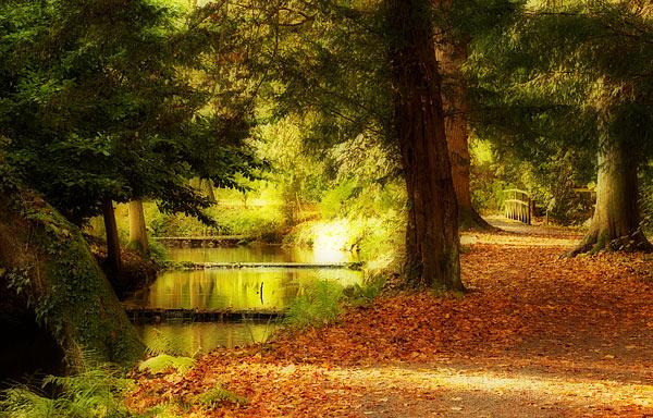 An Autumn Walk - Rest Of Yorkshire
