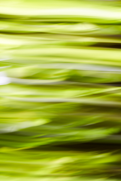 Green Waves - Abstracts