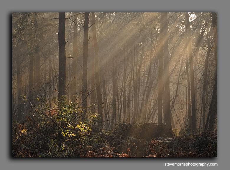 Glowing braken - Sun in Splendour