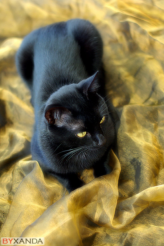 Lucifera's Cat - Other Subjects
