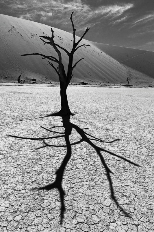 Camel Thorn Trees of Deadvlei - Namib Desert - II - Namibia - 2014