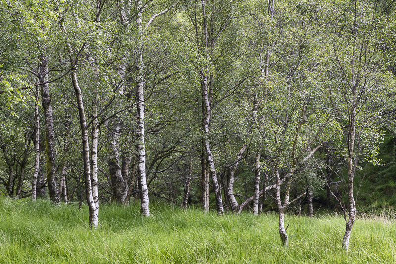 Birch Grove - English Lake District
