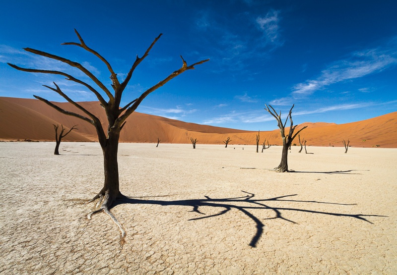 Camel Thorn Trees of Deadvlei - Namib Desert - I - Namibia - 2014