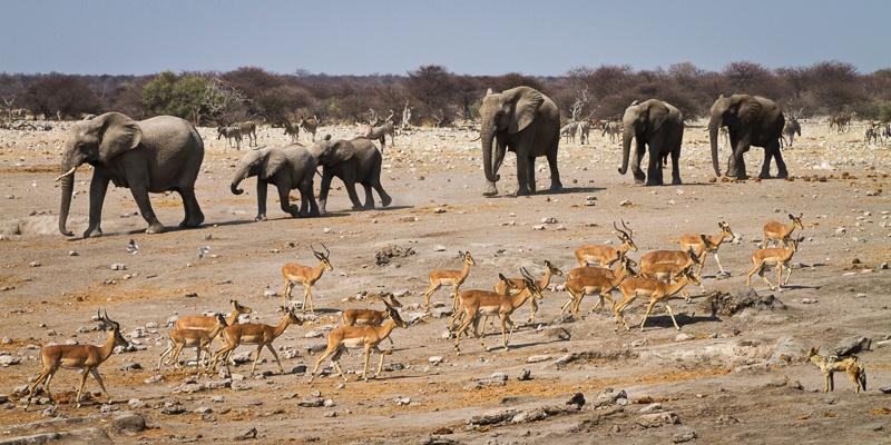 And One Jackal - Namibia - 2014