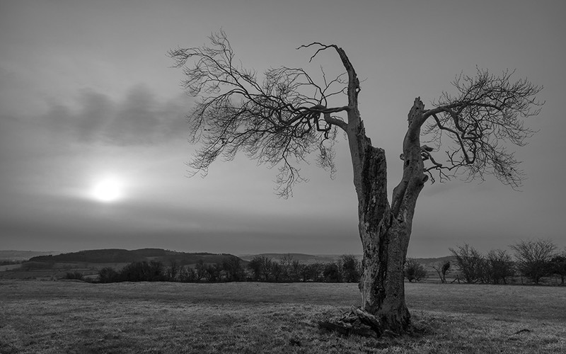Day 1 - Spilt Tree - On Bredon Hill - 2016