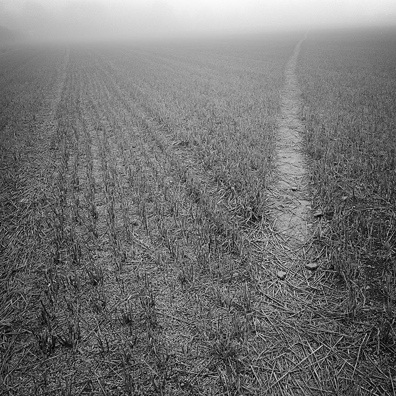 2249 - Misty Stubble Field Path - The Cotswold Way - 2009