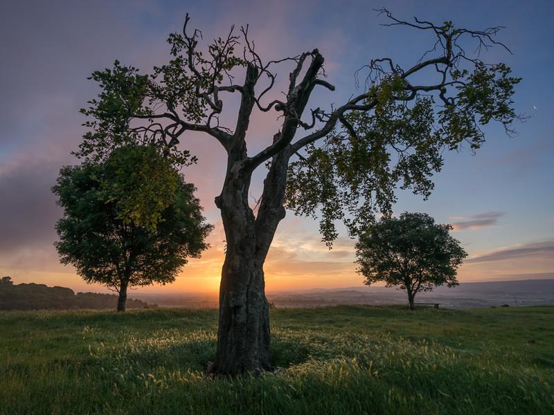 Day 31 - Three Tree Sunrise - On Bredon Hill - 2016