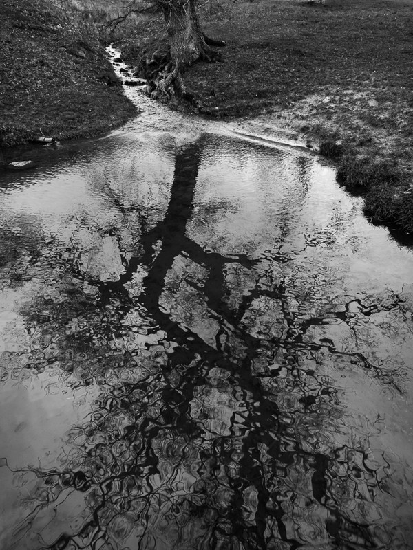 Day 12 - Reflected Oak - On Bredon Hill - 2016
