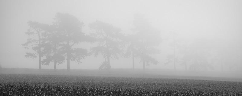 Day 47 - Scots Pine Mist - On Bredon Hill - 2016