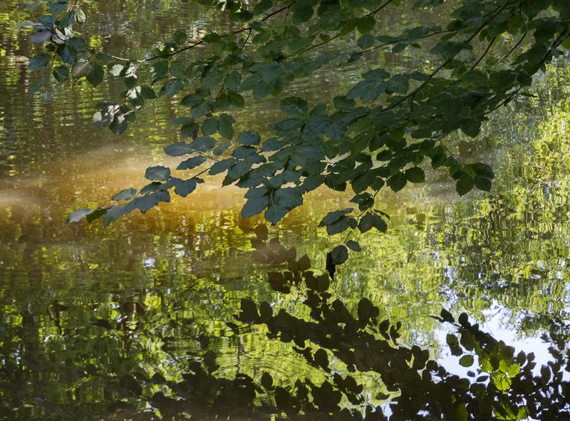 Beech Reflections - Worcester Birmingham Canal