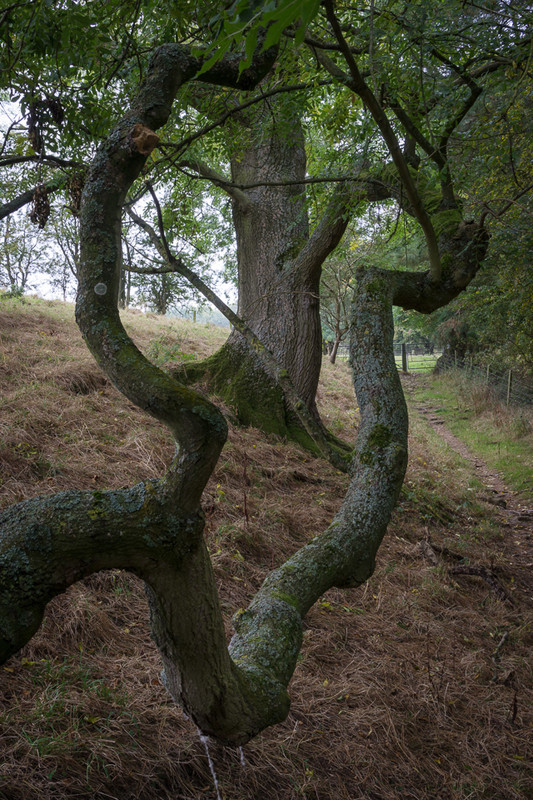 Day 45 - Amazing Branch - On Bredon Hill - 2016