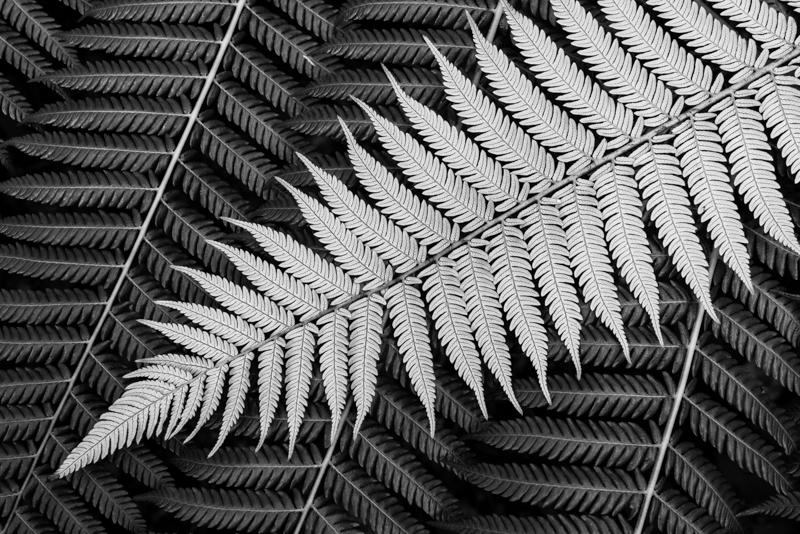 Under Fern - New Zealand's South Island - 2018