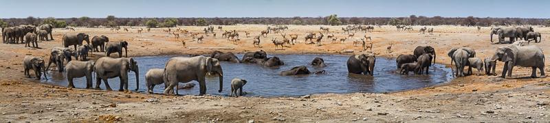 Crowded Waterhole - Etosha - Namibia - 2014