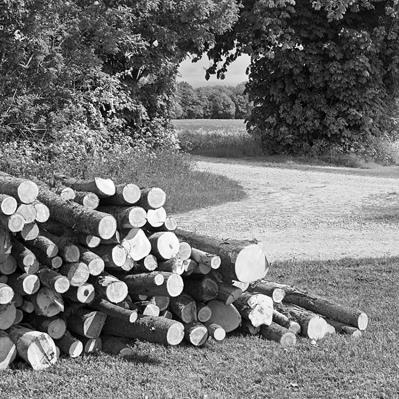 2129 - Log Pile - The Cotswold Way - 2009