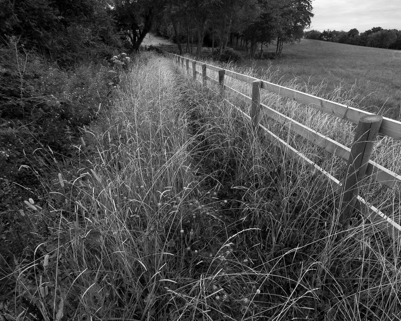 Day 38 - Grasses and New Fence - On Bredon Hill - 2016
