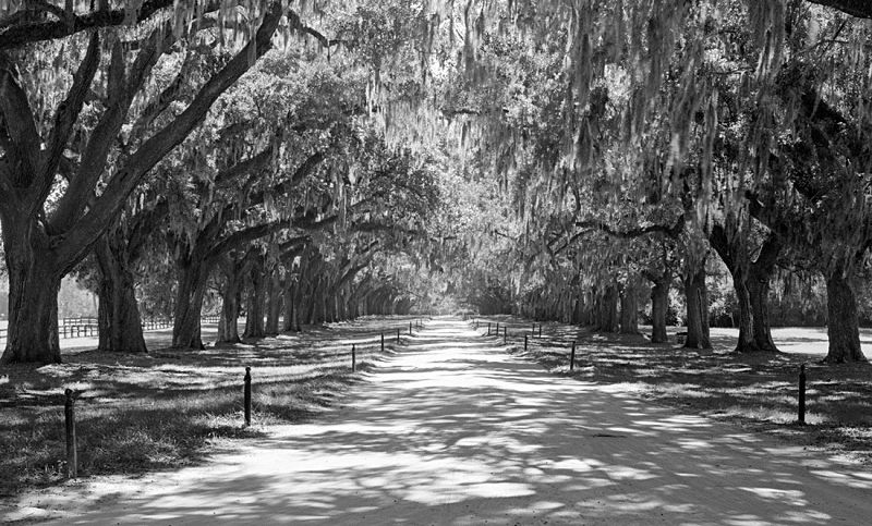 1654 - Oak Avenue 1 - USA - 2007 - South Carolina & Georgia