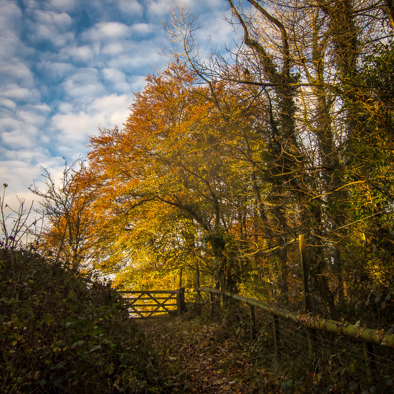 Day 48 - Autumnal Gate - On Bredon Hill - 2016