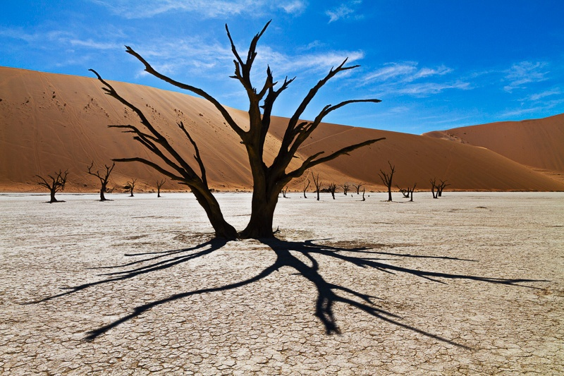 Camel Thorn Trees of Deadvlei - Namib Desert - III - Namibia - 2014