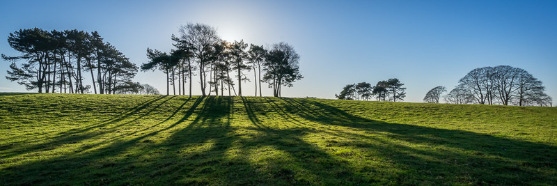 Day 52 - Scots Pines - On Bredon Hill - 2016