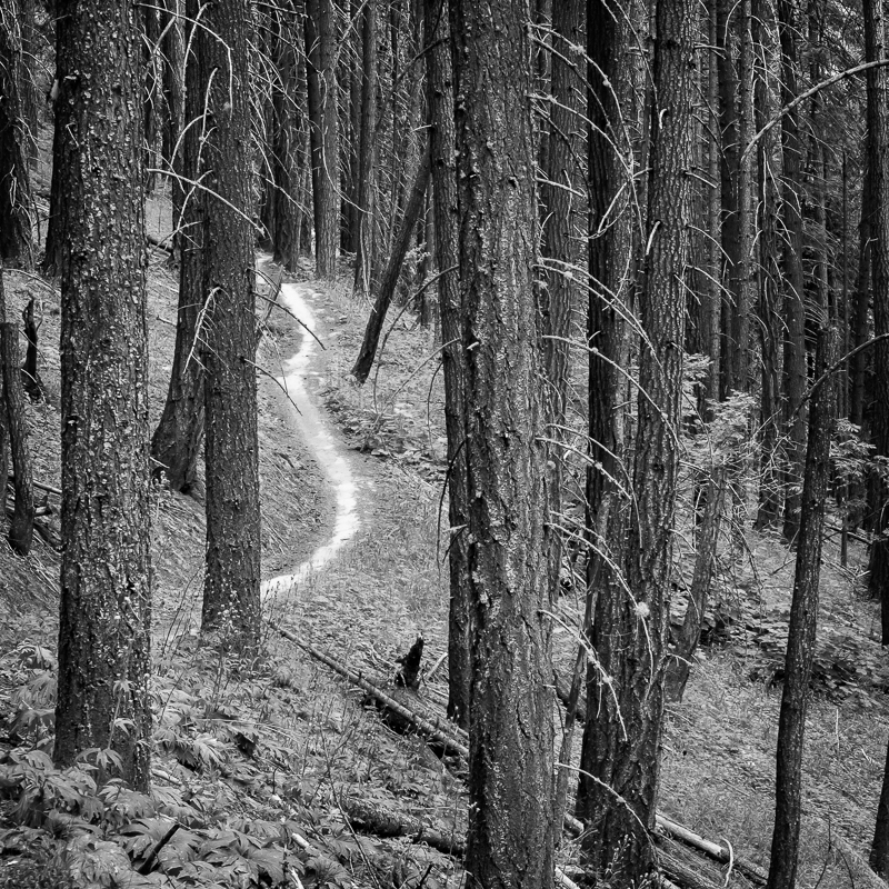 Pine Path - USA - 2016 - Wyoming and Washington