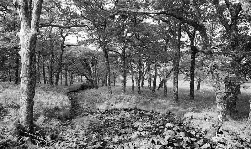 1225 - Erriff River Woodland - Images from Ireland