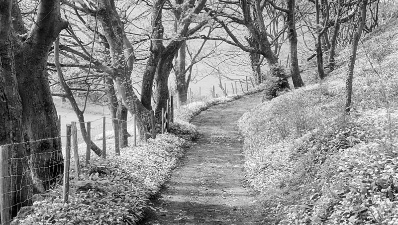 1455 - Wild Garlic Path 2 - Images from Wales