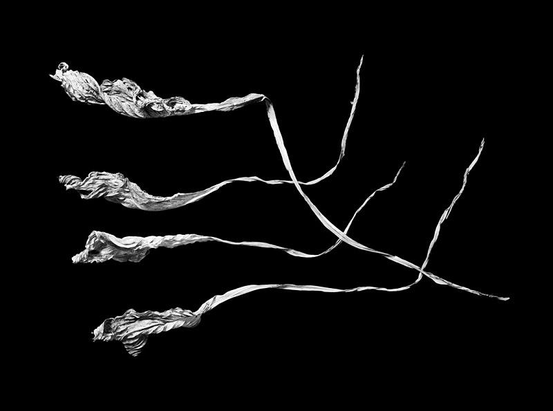 1185 - Four Dried Hosta Leaves 1 - Trees & Plants
