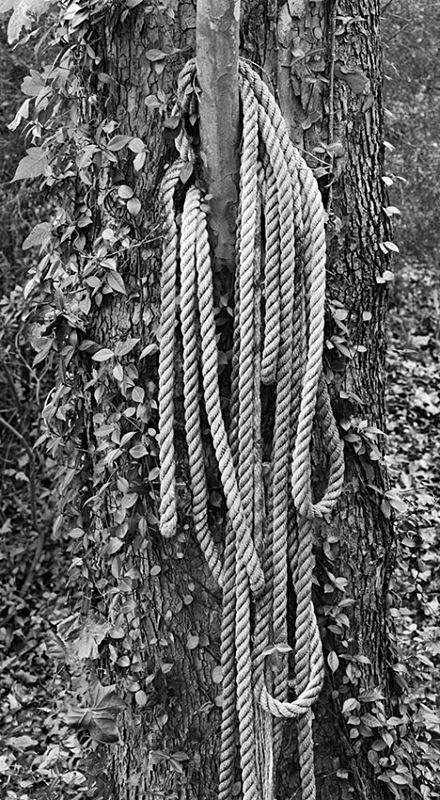 1643 - Engulfed Rope - USA - 2007 - South Carolina & Georgia