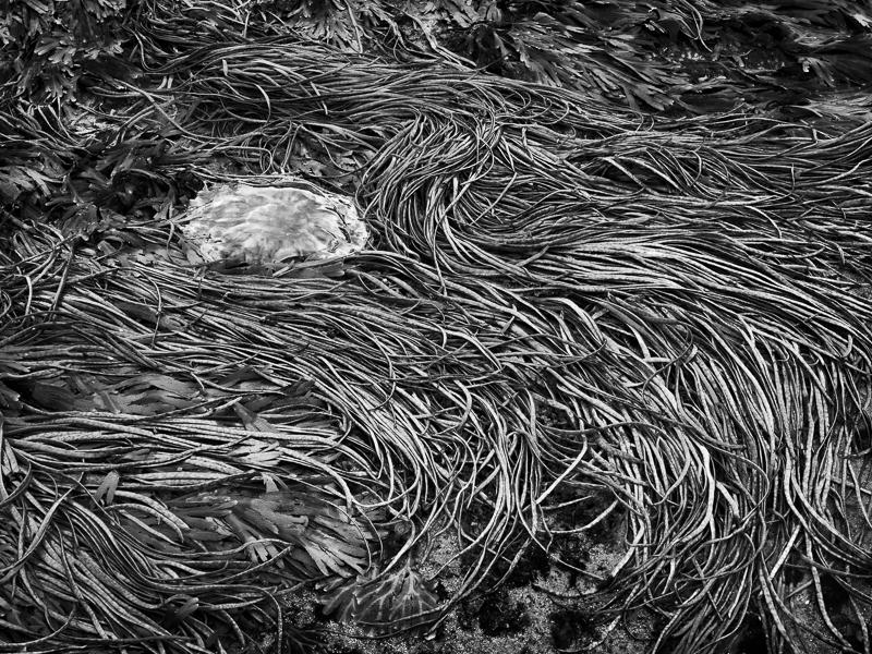 Jellyfish - High and Dry - Isle of Skye - 2017