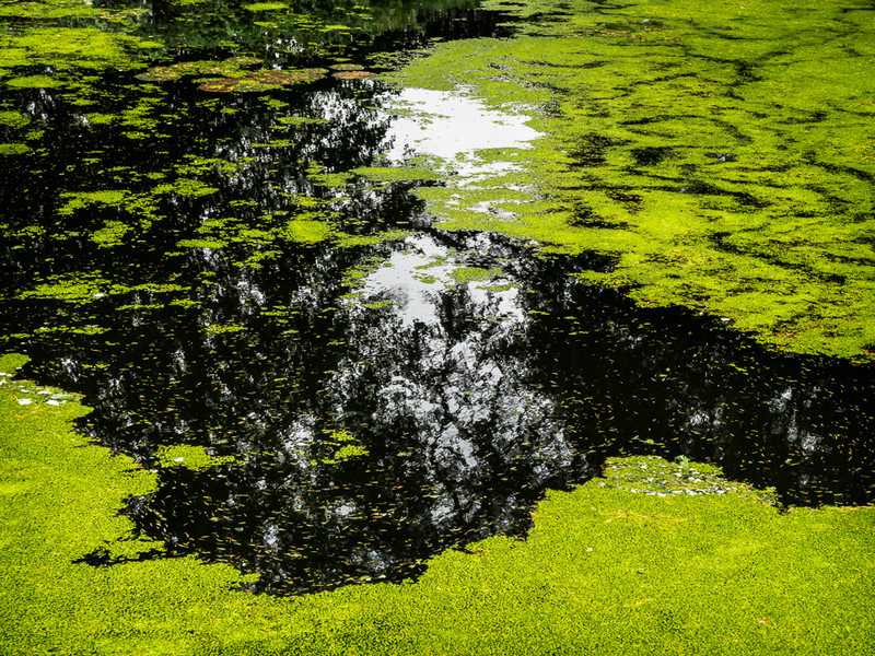 Day 33 - Duckweed - On Bredon Hill - 2016
