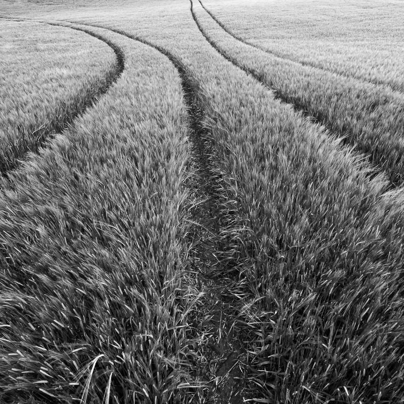 Day 30 - Barley Tracks - On Bredon Hill - 2016