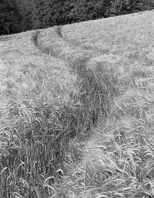 2172 - Barley Tracks - The Cotswold Way - 2009