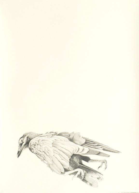 Crow 20in x 30in - Bird drawings