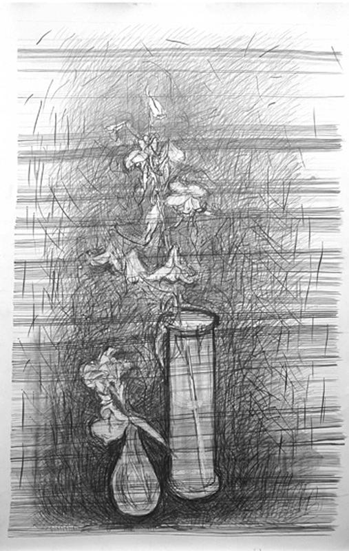 Horizontal 36in x 60in - Flower Drawings
