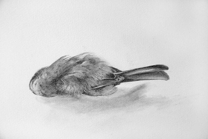 bird detail - Bird drawings
