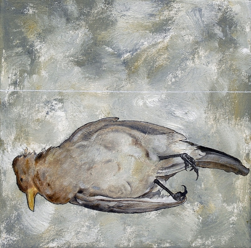 Blackbird 2 10in x 10in - Bird Paintings