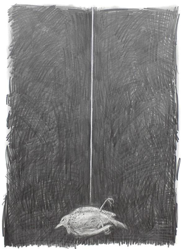 Eraser Thrush - Bird drawings