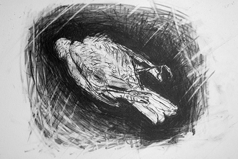 Antother Pigeon - Bird drawings