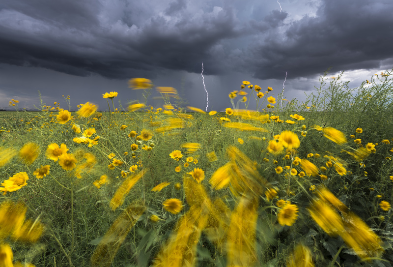 Monsoon lightning with flowers - North America