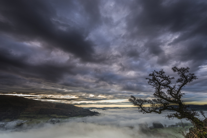 Crooked Tree dawn - Lake District & Cumbria