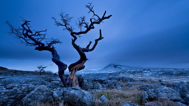 Twisted tree, Twistleton, Yorkshire Dales - Yorkshire Dales & Yorkshire