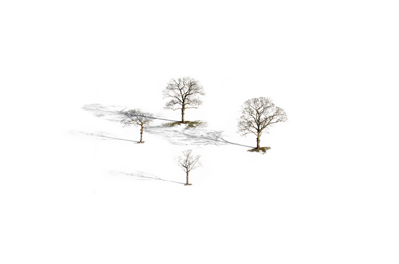 Four Trees - Peak District & surrounding area